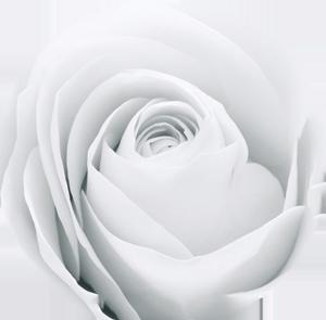 rose_w